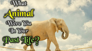 What Animal Were You In Your Past Life?